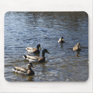 ducks in water, green timber park mouse pad