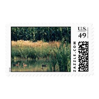 Ducks in Wetland Postage Stamp
