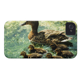 ducks iPhone 4 cover