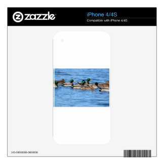 ducks iPhone 4S decal