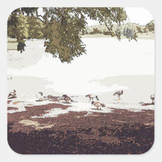 Ducks.jpg Pegatina Cuadrada