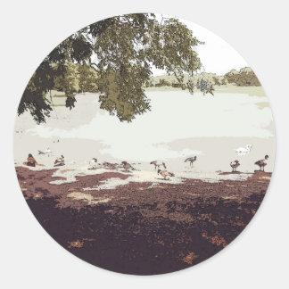 Ducks.jpg Pegatina Redonda