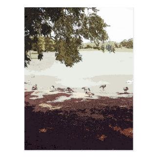 Ducks.jpg Postal