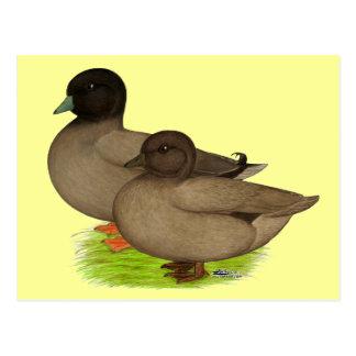 Ducks:  Khaki Calls Postcard