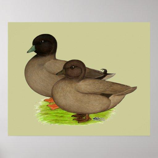 Ducks:  Khaki Calls Poster