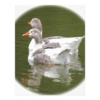 ducks letterhead