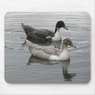 Ducks Mouse Pad