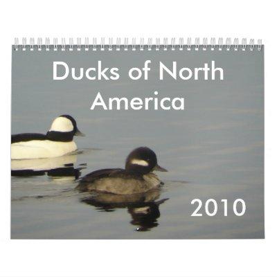 Ducks of North America 2010 Wall Calendars