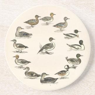 Ducks of North America Illustrations Drink Coaster