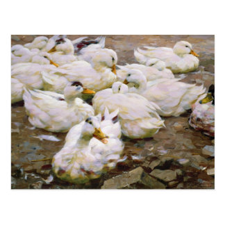 Ducks on a pond postcard