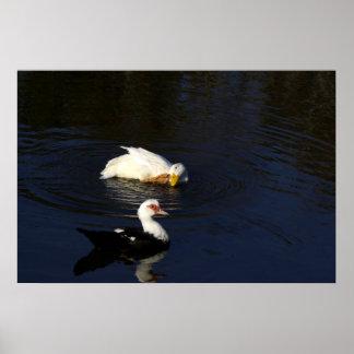 Ducks on a Pond Print