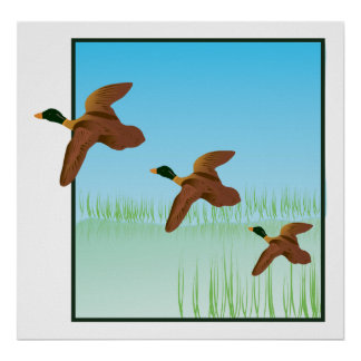 Ducks on a Pond Posters
