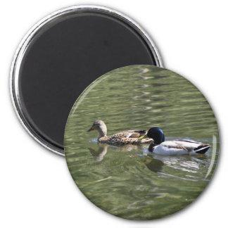 Ducks on Aspen Lake 2 Inch Round Magnet