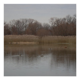 Ducks on Darby Lake Photo Poster