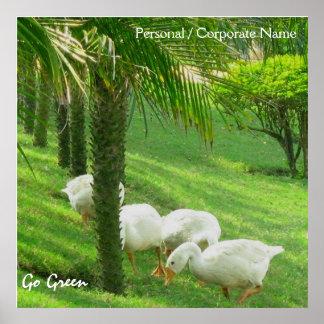 Ducks on Green Grass Poster