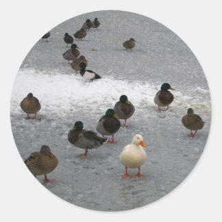 Ducks on Ice Round Stickers