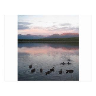 Ducks on lake & Chugach Mountains Alaska Postcard