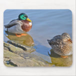 Ducks Resting Mouse Pad