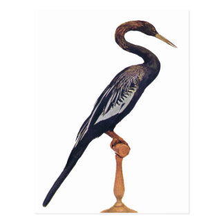 Ducks, Snake Bird, Bird of Paradise Postcard