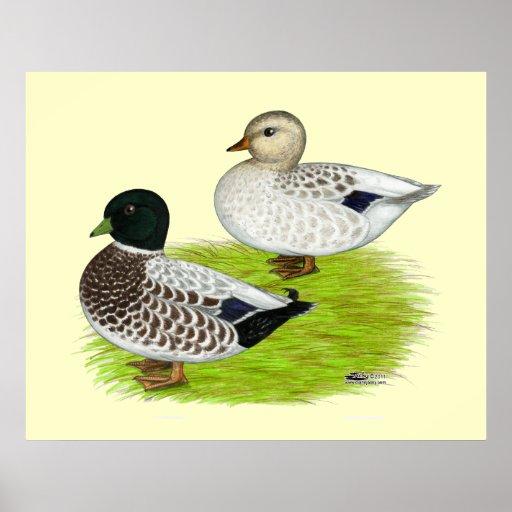 Ducks:  Snowy Calls Poster