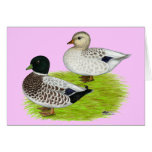 Ducks:  Snowy Calls Stationery Note Card