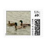 ducks stamp
