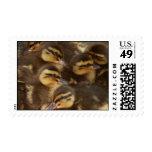 ducks! stamp
