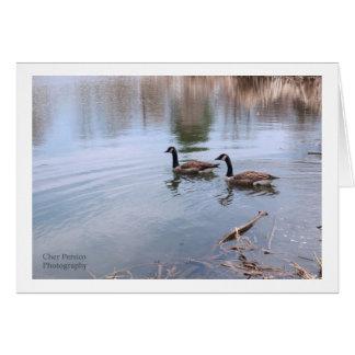 Ducks Swim In Pond Card