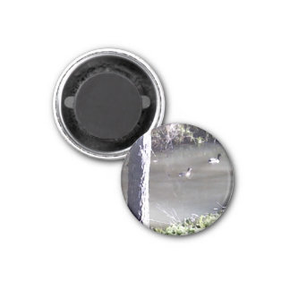 Ducks Swimming In The Creek 1 Inch Round Magnet