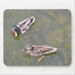 Ducks Swimming in the lake Mouse Pad Mouse Pad