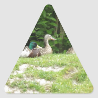 Ducks Triangle Sticker