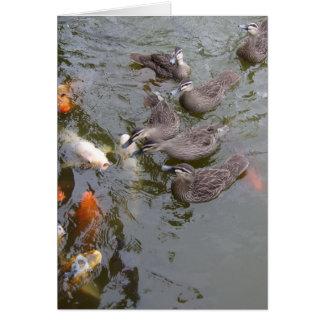 Ducks Vs Koi Card