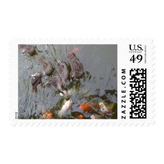 Ducks Vs Koi - Postage Stamp