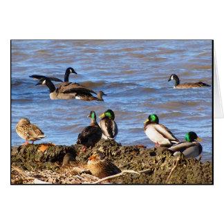 Ducks Watching Geese Birthday Greeting Card