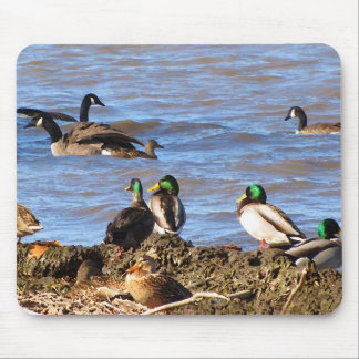 Ducks Watching Geese Mouse Pad
