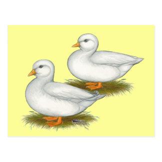Ducks:  White Calls Postcard