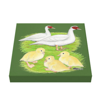 Ducks White Muscovy Family Canvas Print