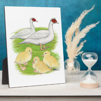 Ducks White Muscovy Family Plaque