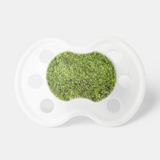 duckweed-377535  duckweed water lens aquatic plant pacifier