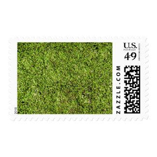 duckweed-377535  duckweed water lens aquatic plant postage