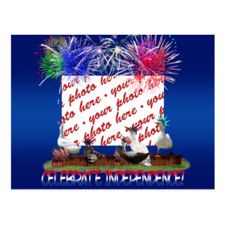 Ducky Celebration for the 4th of July Frame Postcard
