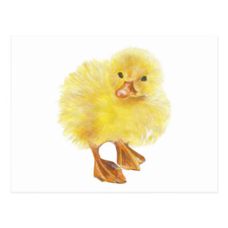 ducky, polluelo del bebé postal
