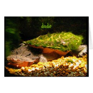 Dude Birthday ~ funny Matamata turtle card Cards