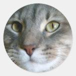 dude cat Stickers