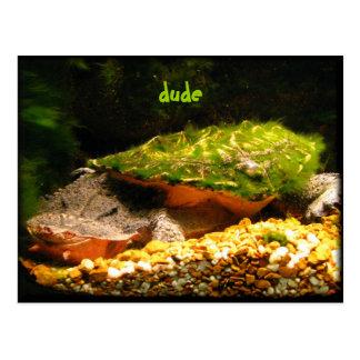 Dude ~ funny Matamata turtle postcard
