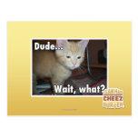 Dude Postcard