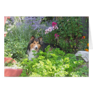 Dudley in the Garden -  Note Cards