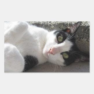 Dudo The Adorable Cat Rectangular Stickers
