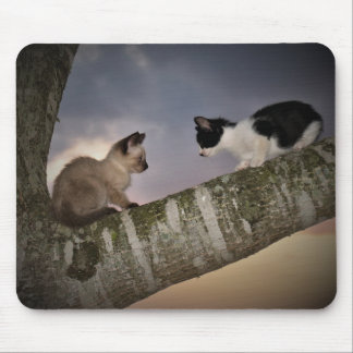 Dueling Kittens Mouse Pad
