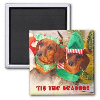 Duende del navidad del perro de Weiner Imán Cuadrado